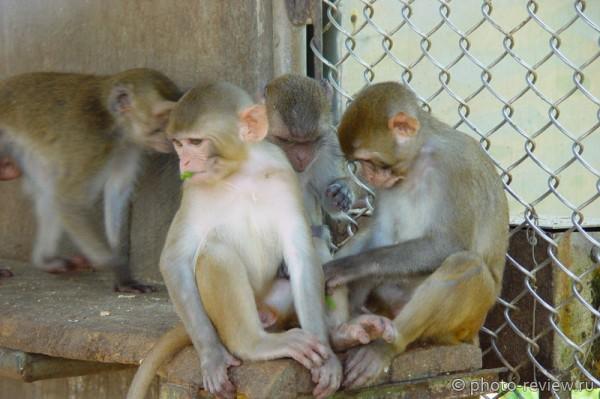 обезьяны в адлере