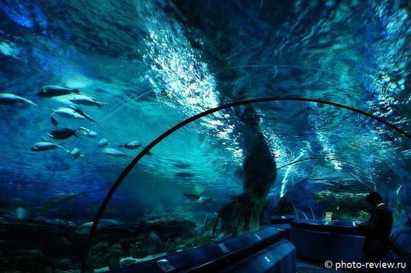 тоннель океанариума