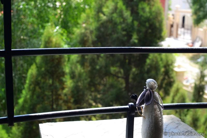 овечка дуся в старом парке