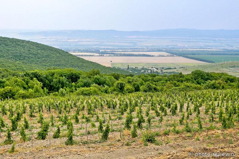 виноградники джемете