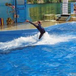 Дельфинарий в Витязево