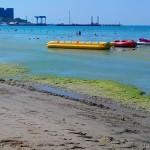 почему цветет море в анапе