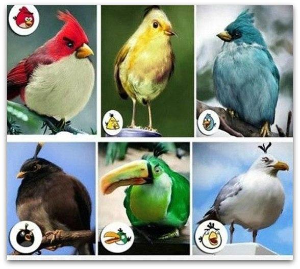 Реальные прототипы птичек из Angry Birds